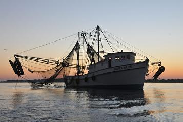 Websunshrimpboat