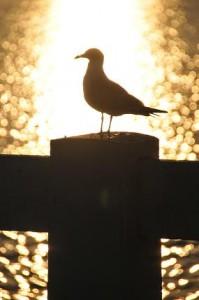 Birdsilhouette